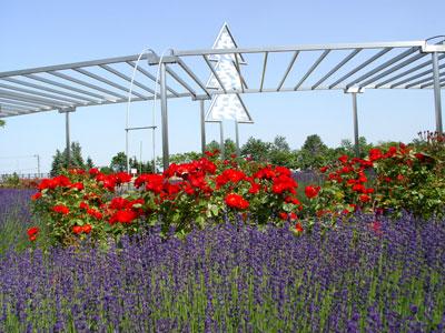 百合が原公園〜バラとユリとラベンダー
