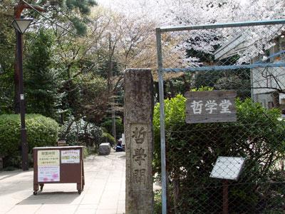 哲学堂公園で、桜・お花見・シンジラレン!